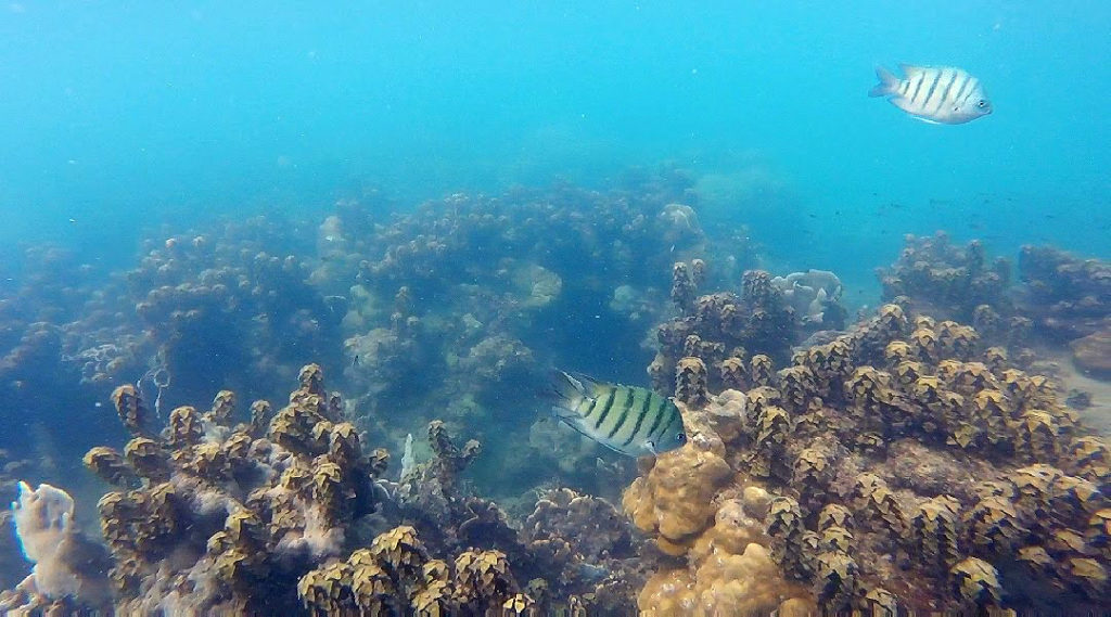 Snorkeling a Koh Rong