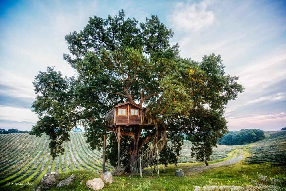 Una delle due case sull'albero di La Piantata